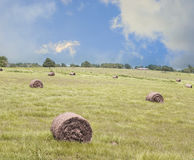 Bales of Hay in a Field Stock Photography
