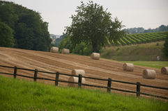 Bales of hay in a field in Switzerland Stock Image