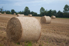 Bales of hay in a field in Switzerland Royalty Free Stock Photography