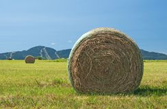 Bales of hay in the green field Stock Image