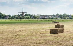 Bales of hay after harvesting of the dried grass Royalty Free Stock Photography