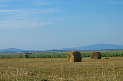 Bales of hay landscape Stock Photography
