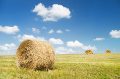 Bales of hay in a large field. Stock Photography