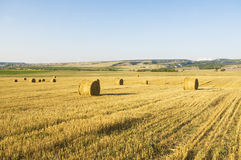 Bales of hay in a large field. Royalty Free Stock Photography