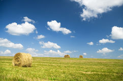 Bales of hay in a large field. Stock Photo
