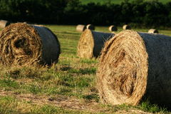 Bales of hay. On meadow Royalty Free Stock Photos