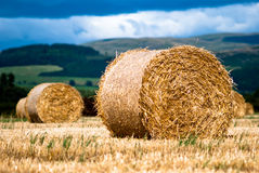 Bales of hay on meadow against the sky V1. Hay bales on a field with clouds in background Royalty Free Stock Images