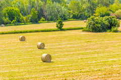 Bales of hay on the mown fields. Yellow round bales of hay spread in cultivated fields now mown in the Italian countryside stock image