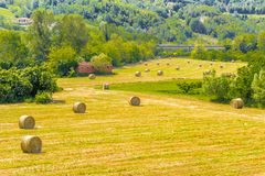 Bales of hay on the mown fields. Yellow round bales of hay spread in cultivated fields now mown in the Italian countryside stock photo