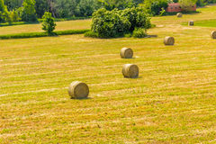 Bales of hay on the mown fields. Yellow round bales of hay spread in cultivated fields now mown in the Italian countryside royalty free stock images