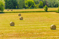 Bales of hay on the mown fields. Yellow round bales of hay spread in cultivated fields now mown in the Italian countryside stock images