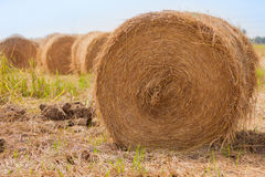 Bales of hay in paddy fields after harvest Royalty Free Stock Images