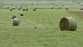 Bales of hay stock footage