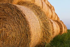 Bales of Hay Rolled Into Stacks. Rolls of Wheat in the Grass. Bales of straw. Selective Focus Stock Photography
