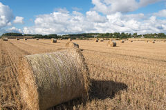 Bales of hay. Stock Photos