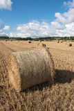 Bales of hay. Royalty Free Stock Image