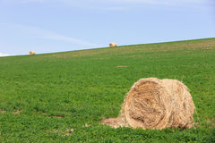 Bales of hay in a row. Bales of hay on a warm sunny summer day Stock Image
