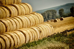 Bales of hay in the summer heat Stock Photos