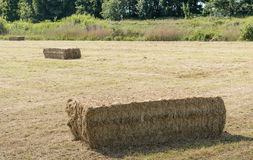 Bales of hay on a sunny day Stock Photos