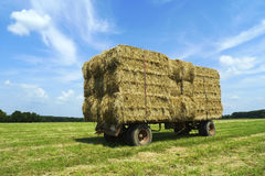 Bales of hay on a trailer standing in a field Stock Image