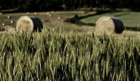 Bales of hay. View on two bales of hay over grain Royalty Free Stock Images