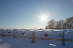 Bales of hay in a winter field under the snow. haystacks in the farm Stock Photo