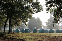 Bales of hay wrapped up in plastic in autumn mist. Bales of hay wrapped up in plastic on a meadow in autumn. Landscape with trees, romantic mood Royalty Free Stock Image