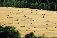 Bales of hey on harvested agriculture field. Bales of hey on harvested autumn agriculture field Stock Photo