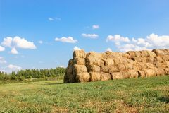 Bales of meadow hay. Hay bales in the field royalty free stock image