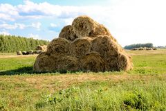 Bales of meadow hay. Hay bales in the field stock photos
