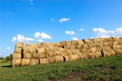 Bales of meadow hay. Hay bales in the field stock photography