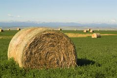 Bales and mountains, Alberta f Royalty Free Stock Photo