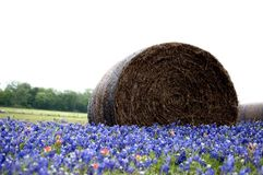 Free Bales Of Hay In A Field Of Wildflowers Royalty Free Stock Images - 114315919