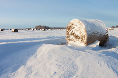 Free Bales Of Hay Laying In Snow On Field Royalty Free Stock Images - 28422889