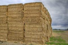 Free Bales Of Hay On Farmland Royalty Free Stock Photo - 16358075