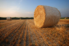 Free Bales Of Straw Royalty Free Stock Photography - 6045457