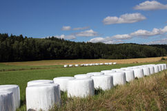 Bales of silage on green field Royalty Free Stock Photos
