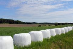 Bales of Silage on Green Field at Summer Stock Images
