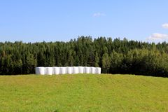 Bales of Silage on Green Summer Field Stock Image