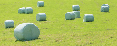 Bales of silage wrapped in white plastic at the green field in s Stock Photography