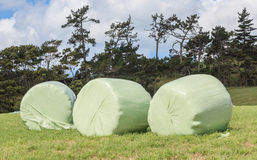 Bales of silage wrapped in white plastic at the green field in s Stock Photos