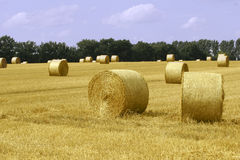 Bales of straw. At a cornfield near Dortmund, Germany, 2006-07-31 Stock Photo