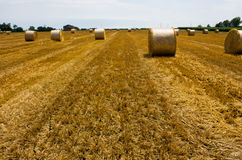 Bales of straw. Field after mowing wheat with bale of straw Royalty Free Stock Image