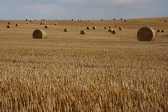 Bales of straw. Wide field with bales of straw Royalty Free Stock Photos