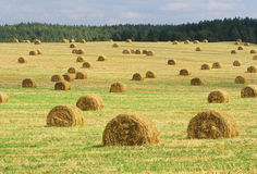 Bales of straw. On rural landscape Stock Photos