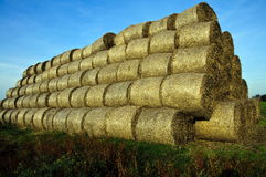 Bales of straw. On the field after the harvest Royalty Free Stock Images