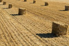 Bales of Straw Stock Image