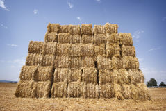 Bales of straw. In the field Royalty Free Stock Images