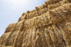 Bales of straw. In the field Royalty Free Stock Image