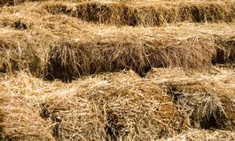 Bales of Straw. Stacked up, good as background Stock Photo